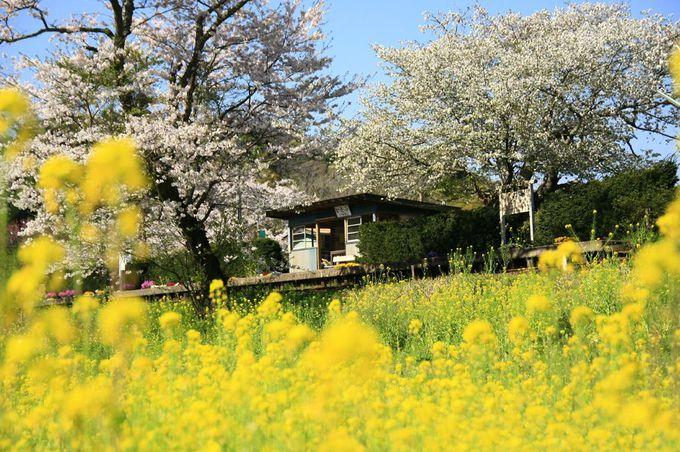 春色満載な昭和の世界へ出発進行...