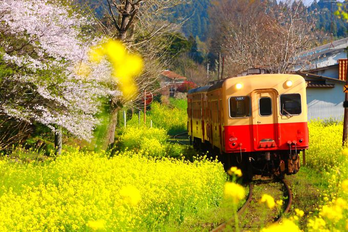 春のローカル線のイメージにぴったり!「里見駅〜飯給駅」