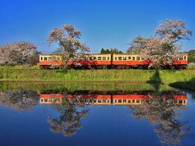 春色満載な昭和の世界へ出発進行!「小湊鐵道」撮影スポット5選|千葉県|トラベルjp<たびねす>