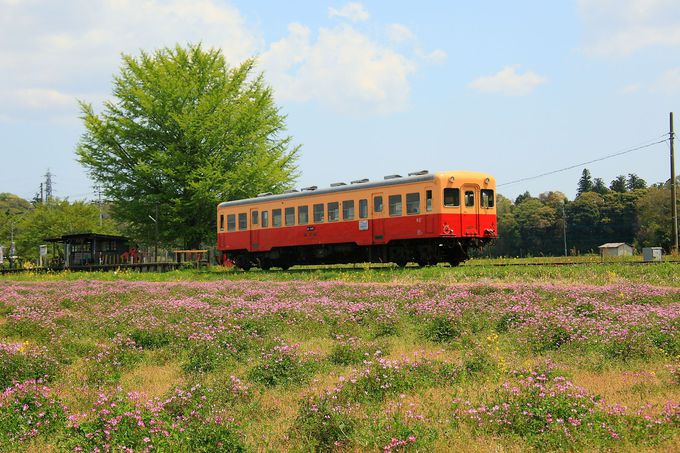 春も深まる4月下旬は蓮華の花が一面に咲き乱れる!「上総久保駅」