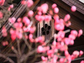 日本三大天満宮の一つ!梅の花が綺麗な鎌倉「荏柄天神社」|神奈川県|トラベルjp<たびねす>