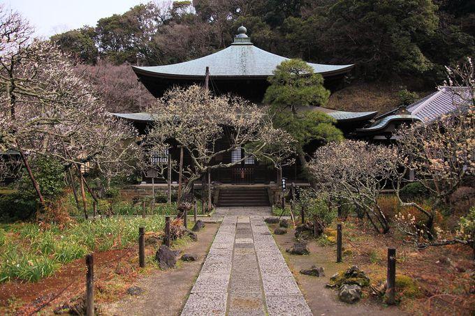 山門をくぐった後の境内庭園は梅の花があちこちに咲く別世界のよう!