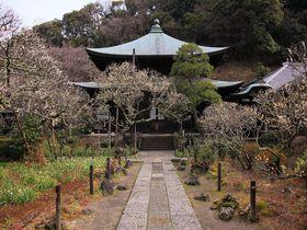 山間部に囲まれた境内に漂う梅の香りを堪能!鎌倉「瑞泉寺」|神奈川県|トラベルjp<たびねす>