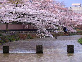 歩くだけでも観光気分!京都のメジャー観光名所を結ぶ「白川」|京都府|トラベルjp<たびねす>