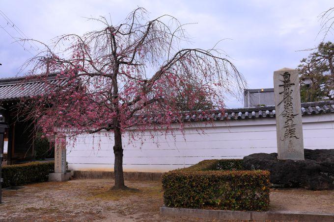 「妙顕寺」の山門といえば南面!