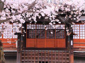 桜色に包まれた境内庭園を堪能しよう!京都西陣の「本隆寺」|京都府|トラベルjp<たびねす>
