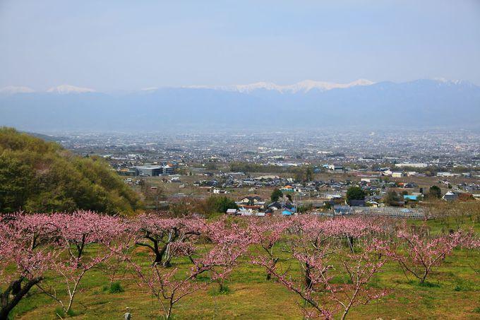 ピンク一色の甲府盆地を見るには俯瞰が一番!「一宮町花見台」
