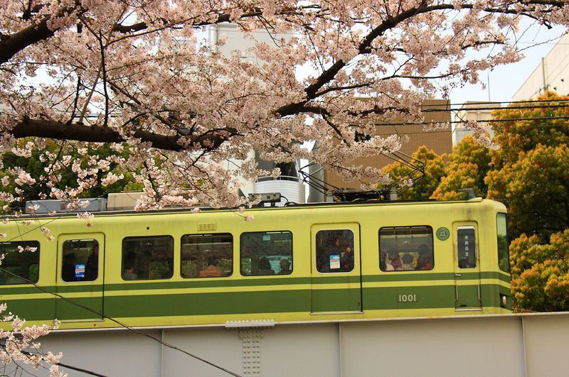 実はあまり公開したくない桜+列車のコラボ!春の「江ノ電」沿線