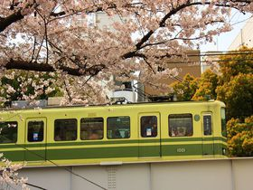 実はあまり公開したくない桜+列車のコラボ!春の「江ノ電」沿線|神奈川県|トラベルjp<たびねす>