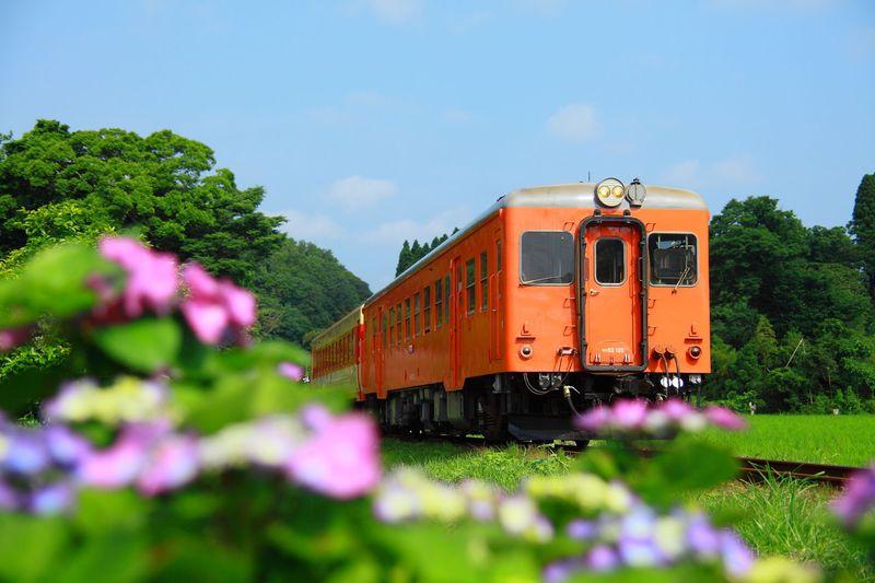 梅雨時の昭和レトロなローカル線へ!千葉「いすみ鉄道」撮影地4選