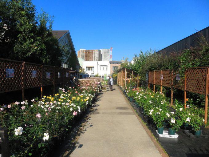 園内出口を抜けるとバラの花が購入できるコーナーも!
