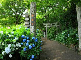 新宿駅から40分!隠れたあじさい寺・川崎「浄慶寺」へ行こう!