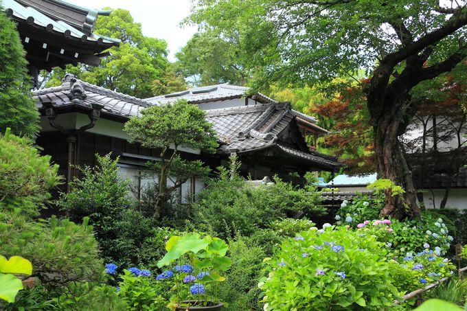 寺務所前には小さな和庭園が!