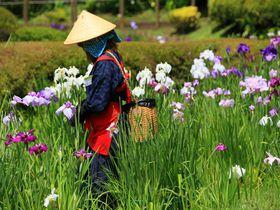 都内とは思えない里山風景の中で菖蒲を堪能!6月の「薬師池公園」|東京都|トラベルjp<たびねす>