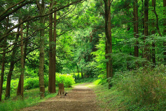 「こども自然公園」の目玉!大きな池と広大な森林