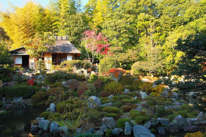 茶室と芙蓉池がメインの境内西側の庭園