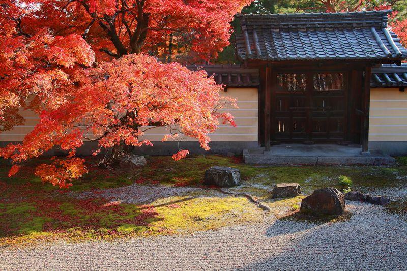 住宅街の中にある紅葉の穴場寺院!庭園が美しい京都「等持院」