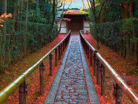 必見!無料で前庭の紅葉を楽しめる京都「大徳寺」の塔頭4選