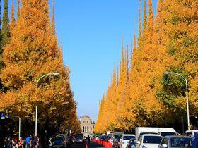 黄金色のイチョウ並木を見ながら「神宮外苑」を歩いてみよう!