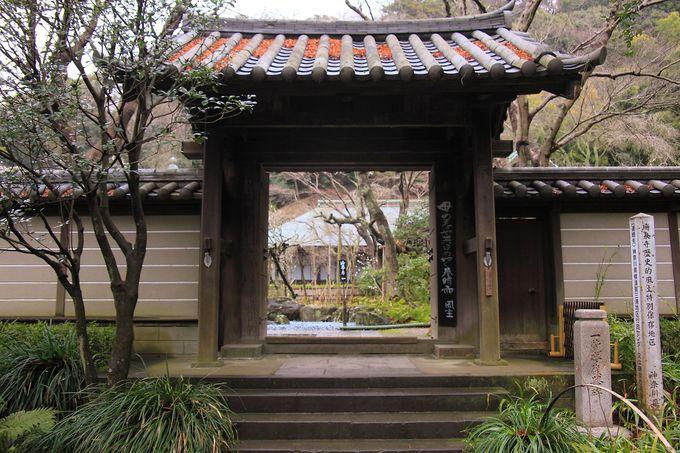 鎌倉一の梅の名所「瑞泉寺」へ!
