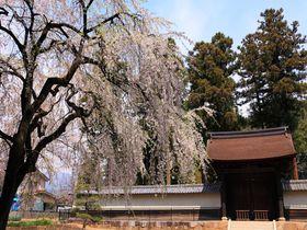 桜満開の古刹参拝は気を引き締めて!山梨県甲州市「向嶽寺」