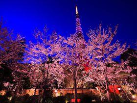 本当は内緒にしておきたい!東京都心の夜桜観賞スポット5選