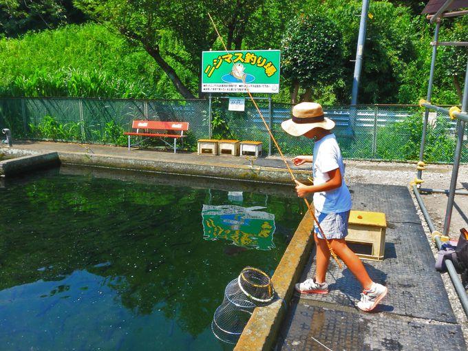 横浜都市圏で釣りを楽しもう!大和市「草柳園フィッシングセンター」