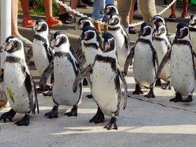 ペンギンの散歩に珍魚コンペイトウ!?福井「越前松島水族館」の楽しみ方|福井県|トラベルjp<たびねす>