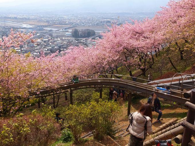 桜の中、春の一日を遊び尽くそう!