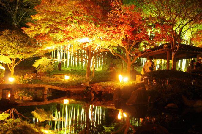 幽玄な世界に浸れる紅葉のライトアップ