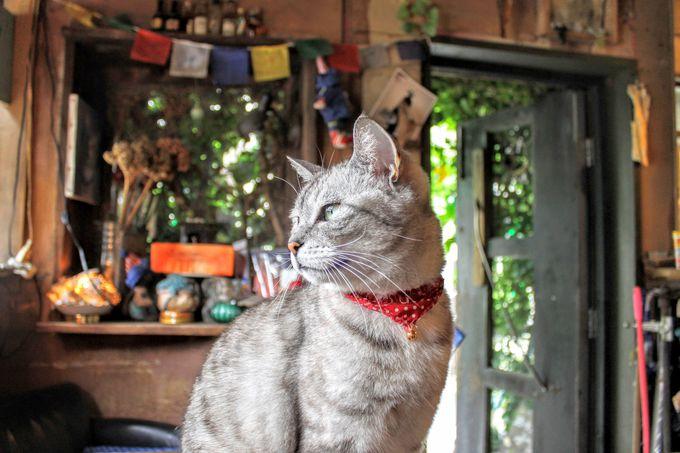 カフェに住む猫ちゃんはカフェの接客係!