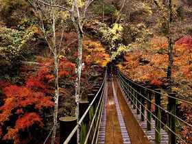 魅力度ランキング最下位「茨城県」の、魅力あふれる紅葉スポット4選