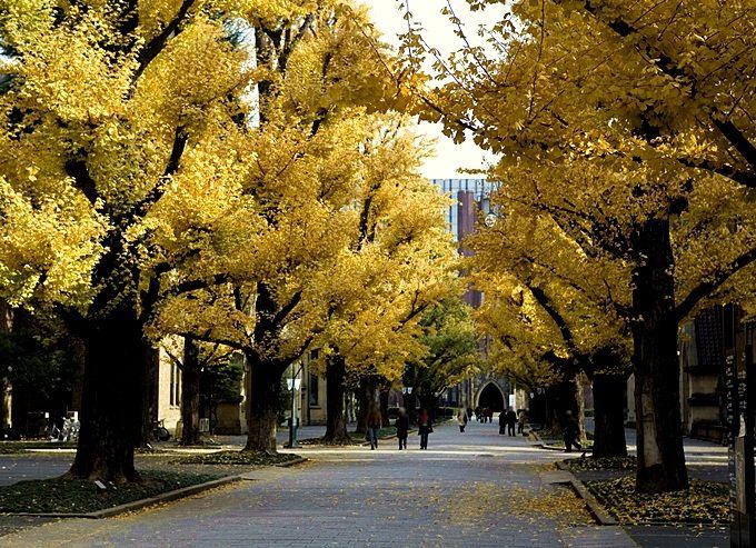 緑豊かなキャンパスは、皆の憩いの場