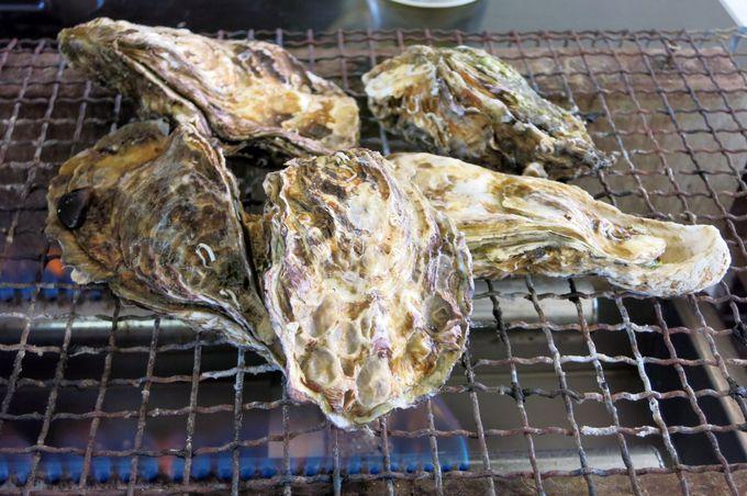 8軒の海産業者が日替わりで提供するカキは大粒で味が深い!