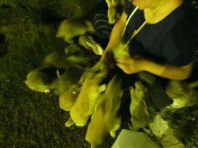モフモフを満喫するなら泊まるべし!広島・休暇村大久野島|広島県|トラベルjp<たびねす>