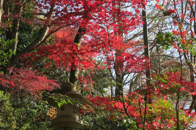 秋の「三瀧寺」は広島屈指の紅葉の名所!真っ赤に染まる谷が美しい