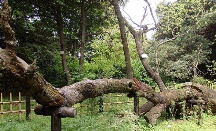 珍しい樹木を発見しましょう!
