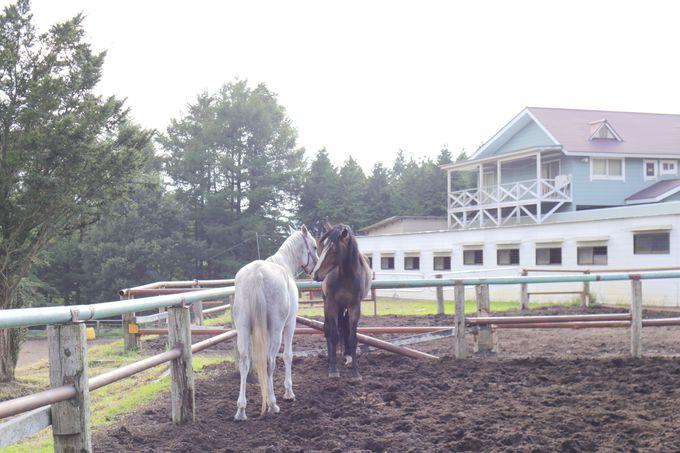 牧場内と外、両方選べる乗馬体験