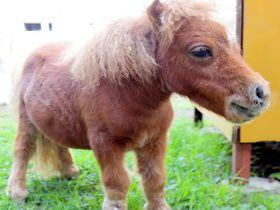 可愛い動物と出会える!信州スエトシ牧場で体感する癒し空間|長野県|トラベルjp<たびねす>