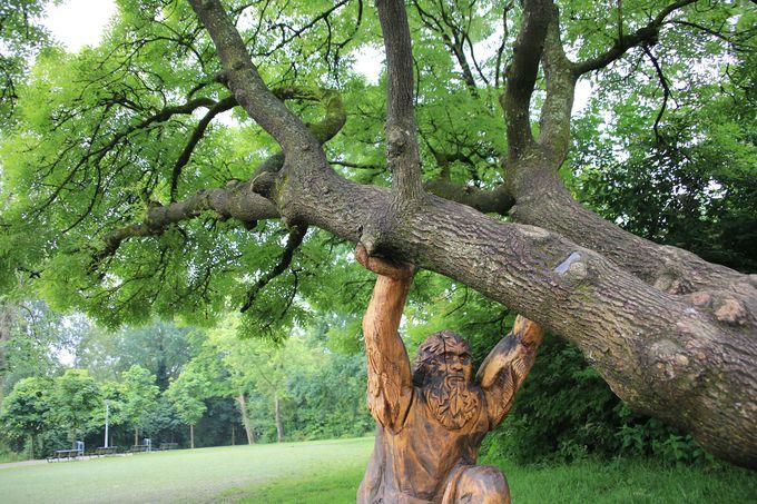 木が木を助け合い!?