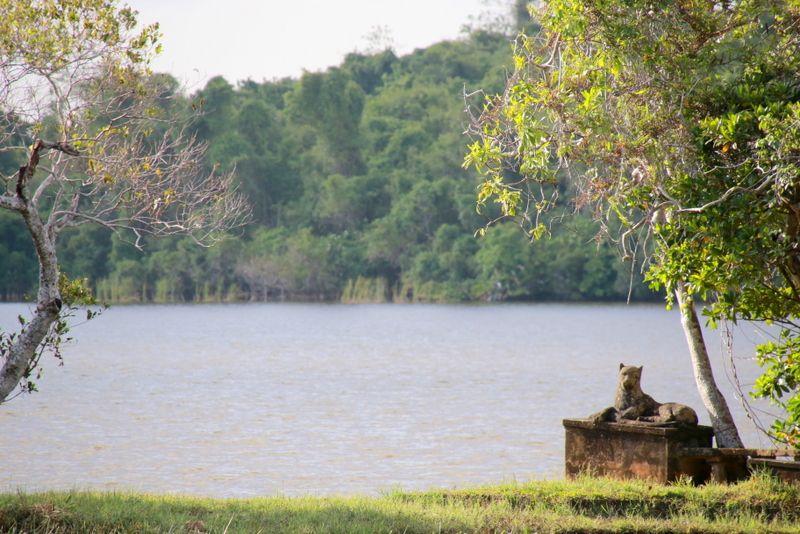 目の前に広がるデダワ湖の景色もおすすめ