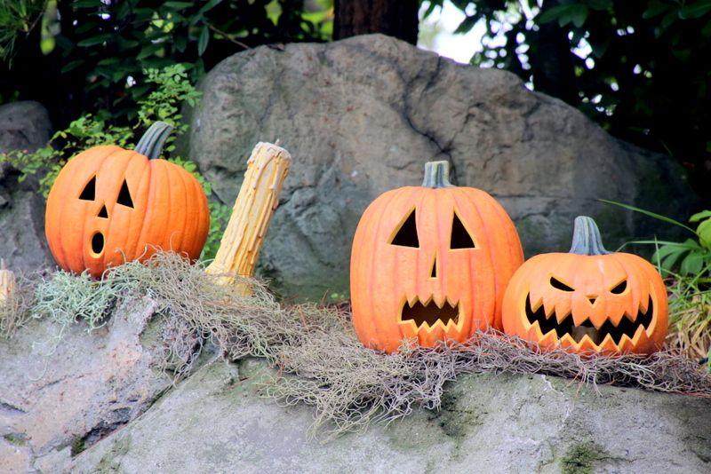個性豊かなかぼちゃたち