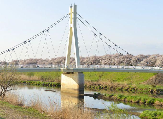 権現堂堤の歴史〜権現堂川の堤防に植えられた桜並木