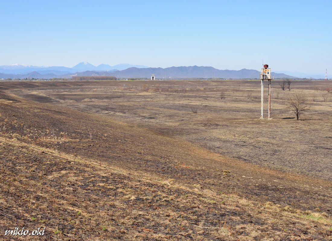 ヨシ焼き後の景観・第2調節池のヨシ原