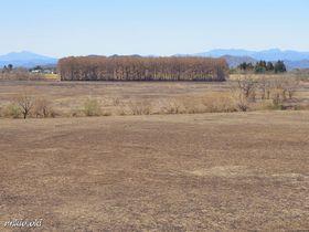 広大な焼け野原を散策〜ヨシ焼き後の渡良瀬遊水地