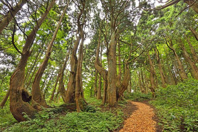 幻想の森へ誘われて