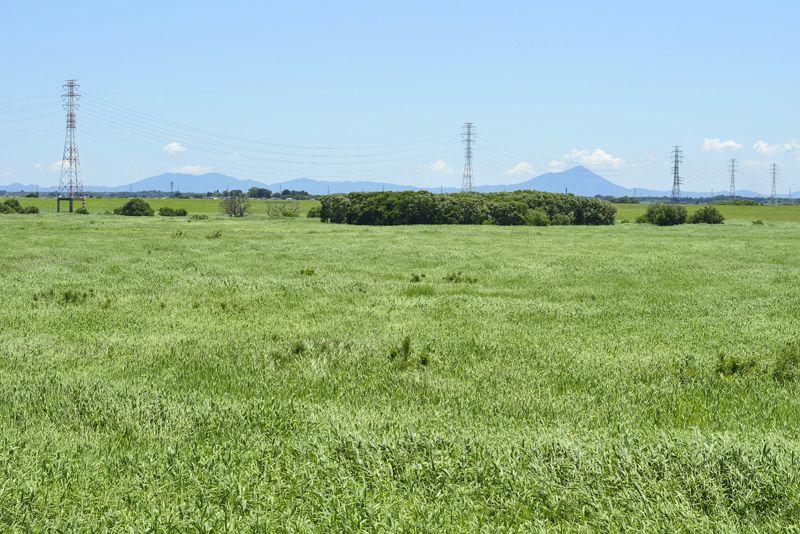 第3調節池の湿地を横切る電線路