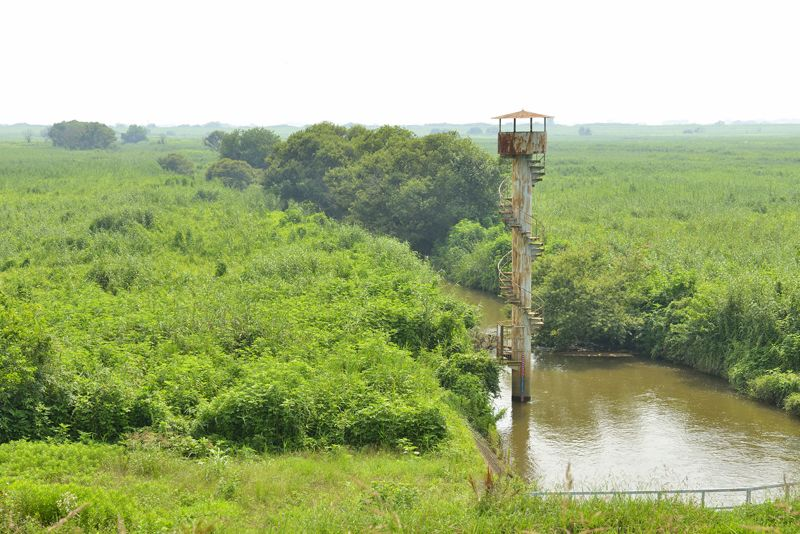 第2調節池の水路沿いの湿地