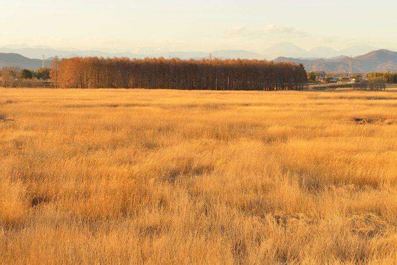 第3調節池の展望台と湿地の奥に見える森
