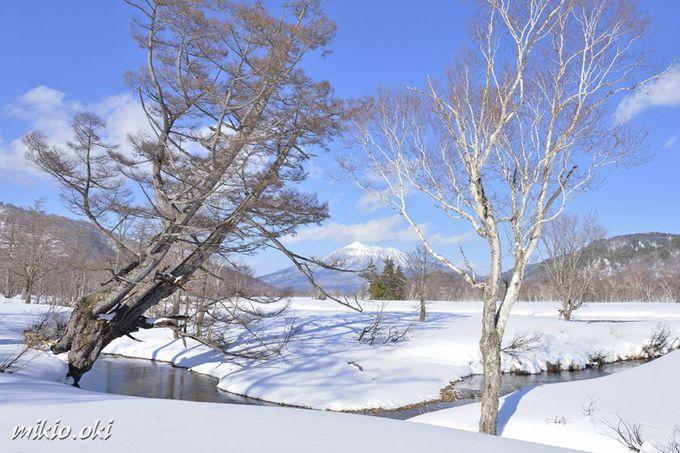 残雪期のみ楽しめる道なき湿原の上